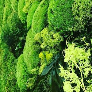 La estabilización o preservación vegetal